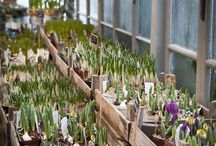 Kasvihuoneet ja viljely
