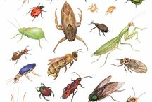 INSECTS- Bugs,  Butterfly,Spiders / Some species of which are very similar alien creatures on earth....Please joint us, and happy pinning