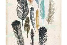 Feathers: A Study