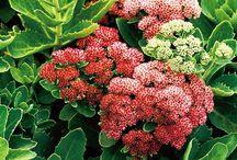 Garden plants we have