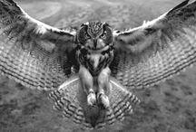 Leona's Owls / by Janice Delaluz