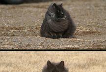 Furry (& Not So Furry)