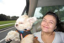 Cachorros graciosos / Animales hermosos y divertidos