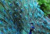 Beautiful and unusual birds