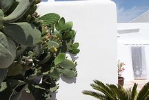 Gardening, Balcony & Rooftop Garden