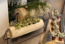 Sukkulenten und Kakteen / Styling mit Pflanzen, Sukkulenten, Sempervivum, Kaktus, Hauswurz, Steinwurz, Wohndesign, Interieur, Zimmerpflanzen, Topfpflanzen, tropische Gewächse, Blumenladen, Blumengeschäft in Hamburg