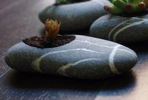 steinpflanzen in stein
