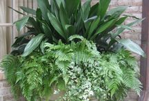 Garden Containers / Potted Plants