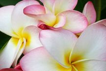 Beautiful Flowers / by Deb Aylsworth
