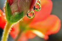 Roua pe flori