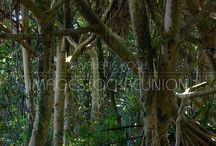 Dans la forêt / Into the forest / #Paysages des #forets primaires de #LaReunion / #Landscapes from the #forests of #Reunion #island