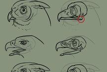 Animals anatomy