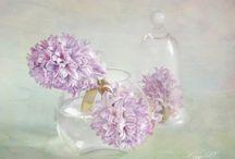 цветы ЛИЗЗИ ПЕ flowers LIZZY PE