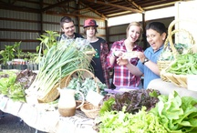 Food and Farm-to-School / by Clearing Magazine