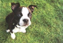 Pups / by Lyndsay Horwedel