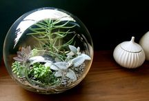 Terrariums / A magical little world of plenty..Cute and manageable gardens for those of us lacking a green thumb or otherwise don't have a backyard.