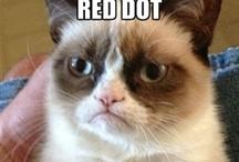 Grumpy Cat :))