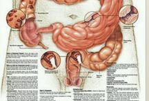 A look inside the Body!