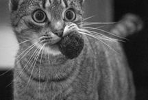 Cat's madness