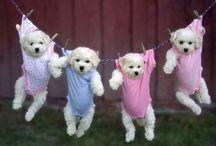 Funny puppies / Hahahah