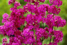 Flores mi pasión