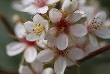 blossom flower floral...