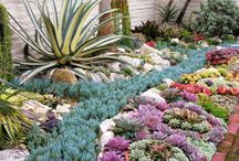 Succulent Design Ideas