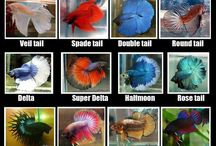 Underwater Friends / My betta fish board with ideas for my fish, Scout.  / by Anne Bradford Spencer