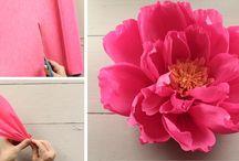 kvet krepovy
