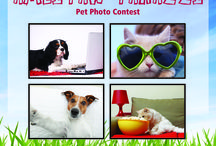 AMLI Paw-parazzi Pet Photo Contest / Our residents shared how their pets make AMLI home in the AMLI Paw-parazzi Pet Photo Contest! How cute are they?!
