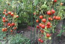 Kertészkedési tippek