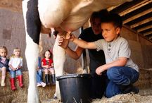 Farm Tours & Birthday Parties / Celebrate your special day by having your birthday party on the farm. Take a private farm tour, then enjoy our picnic area for your party. If you like, we can decorate the whole party for you.  OR, you can enjoy the farm through a traditional farm tour, private tour, or special event. Learn about the history of the farm, pet the calves in the nursery, Milk A Cow By Hand, watch cows being milked in the parlor, and finish by tasting our organic butter!