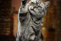Gatos / Los gatos, como felinos que son, son para mí unos seres increíbles. Inteligentes, cautos, únicos y cada uno con su propia personalidad diferenciada. Los reyes y amos de la casa.