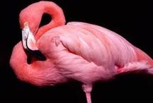 Flamingo / by MaryAnn Jackson