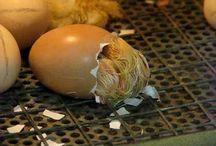 Uit een ei
