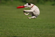 Dogs love Frisbees