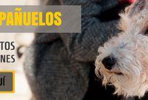 Complementos molones para perros: Bandanas, Pañuelos, Bufandas, Pajaritas / #Bandanas #Bufandas #Bragasdecuello #Pañuelos #Pajaritas #Complementos para #perros molones, actuales y que expresan la personalidad única de tu perro