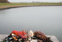 Zilte zaligheden / In de zomer leveren wij heerlijke zeekraal en lamsoren afkomstig van de Zeeuwse schorren. Ze smaken heerlijk in combinatie met schaal- en schelpdieren.
