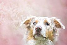 Dogs photoshoot