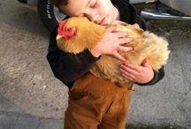 Tendresse, amitié inter espèces / Quand les animaux nous donnent des leçons de tolérance et d'amour, amour maternel, bisous, câlins, les petits....