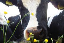 Down on the Farm....
