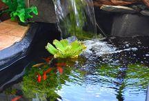 fond of ponds