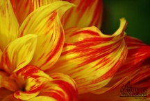 Flowers / by Leslie Foster