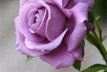Side Rose Garden