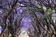 South Africa Photos
