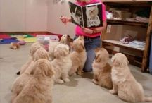 Funny and Cute dog and pets pics / Dogs are Awsome.....
