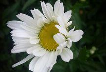 ładne kwiatki;-)