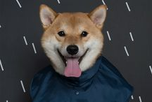 Fashion Pet Rainy Days Supplies Dog Raincoat Poncho