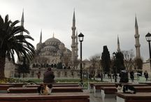 Cats around the world / Istanbul