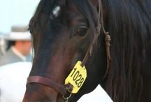 Beautiful horse pictures / pictures that I made of some fantastic horses